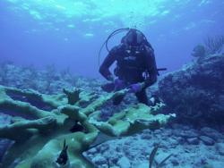 Nature Foundation Relaunches Coral Restoration Program